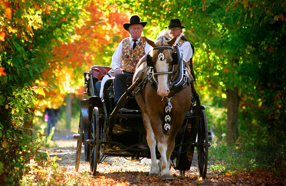 stanleys-farm-wedding-carriage-forest