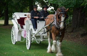 white horse-drawn carriage with bride and maid of honour