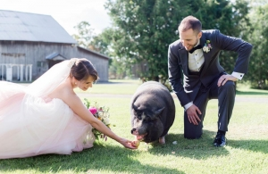 couple feed pumpkin the pig