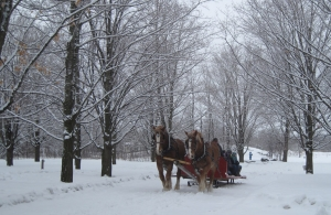 horse-drawn sleigh ride