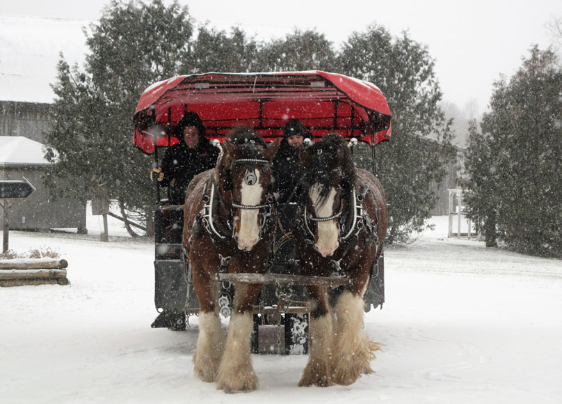 horse-drawn wagon in the snow
