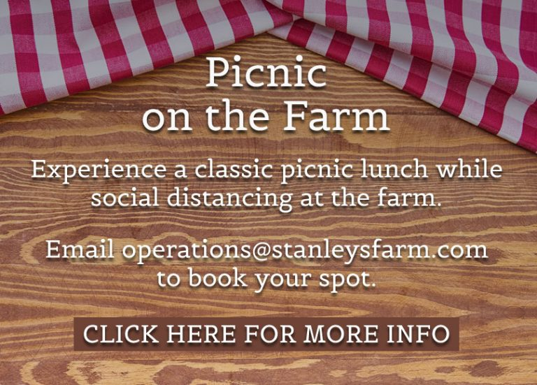 picnic on the farm
