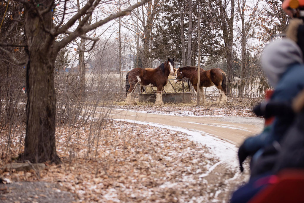 view of horses along the Slagon ride