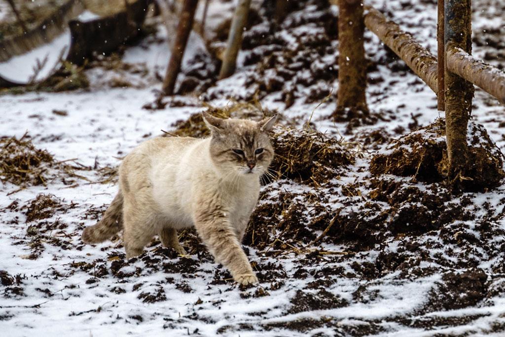 slagon_kitten